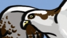 Osprey icon