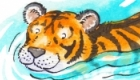 Tiger swims - self promotional piece