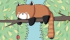 Red Panda. A new print design.
