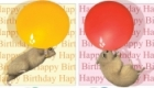 Hamster and balloons birthday cards