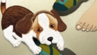 Puppy chewing shoe - concept illustration for children's animation